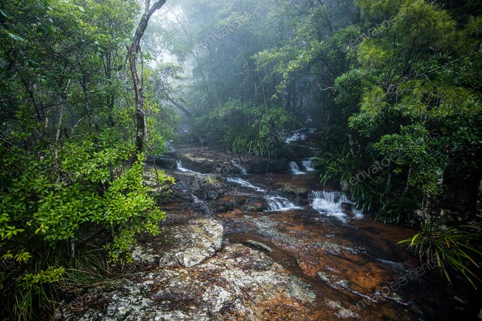 Top of Twin Falls hike in the Springbrook National Park, Austral