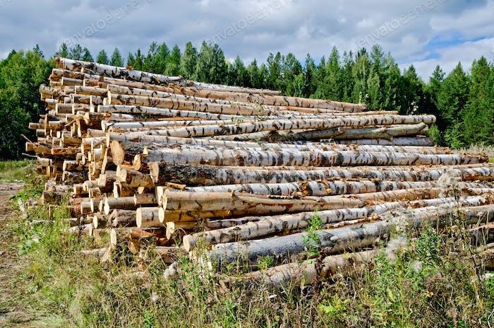 Holzbock geerntet