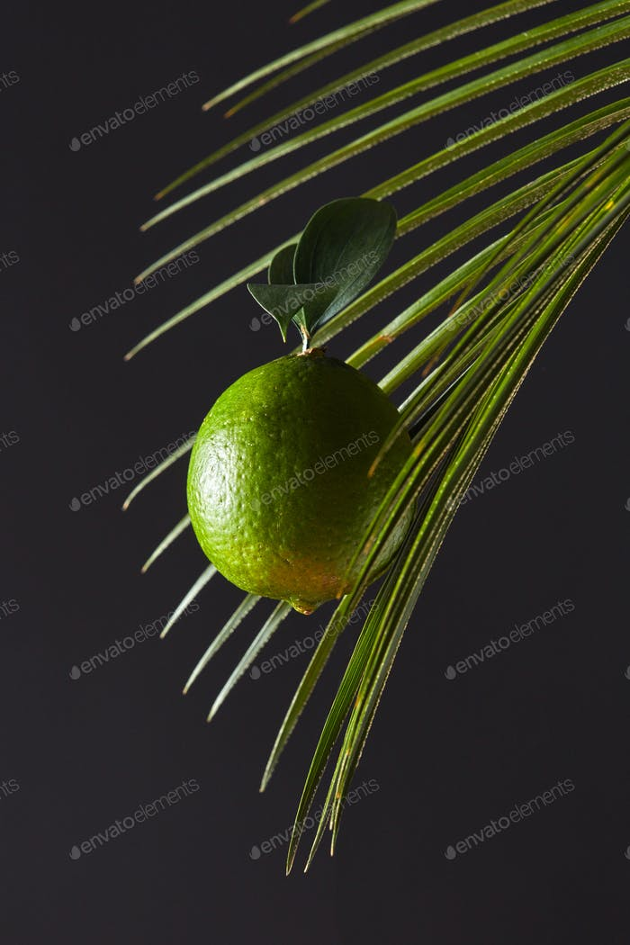 Fresh lime on palm leaf around black background with copy space. Food layout