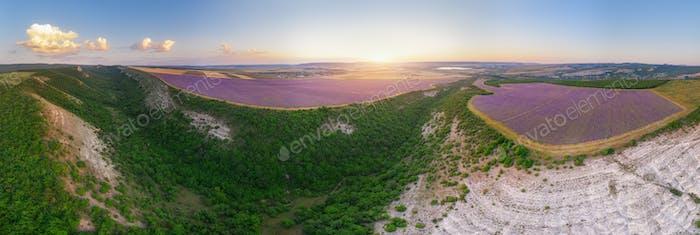 Aerial meadow dig panorama of lavender