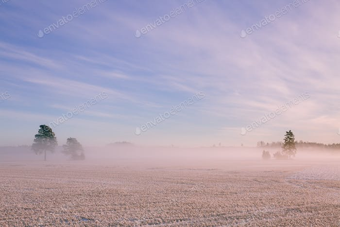 Morning winter landscape. Snow trees and frosty fog on the field.