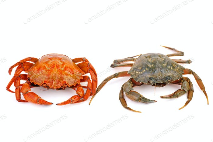 Boiled and live crabs on a white background.
