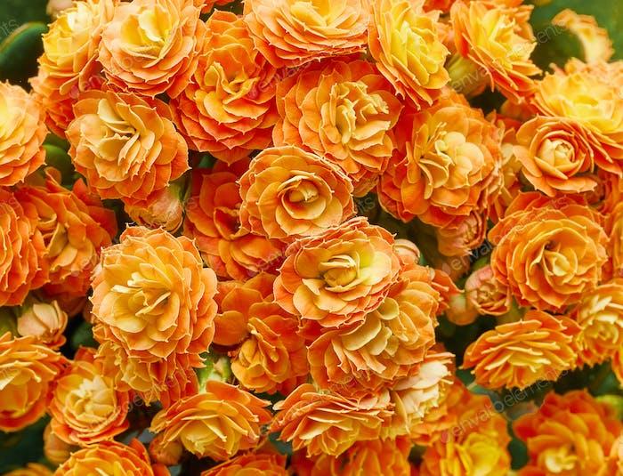 blühende Blumen-Hintergrund
