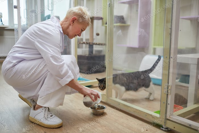 Woman feeding cats in clinic