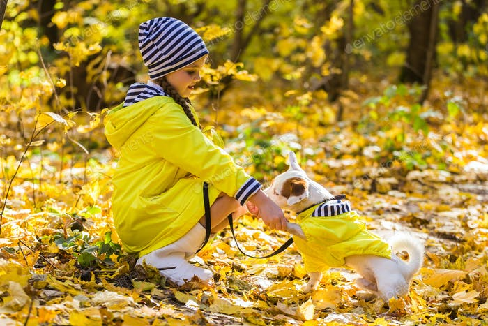 Child playing in autumn park with a jack russell terrier. Kid and jack russell terrier dog