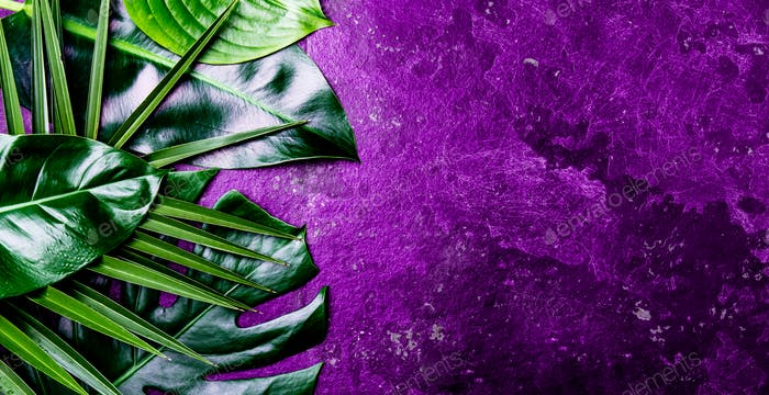 Creative tropical leaves background. Trandy tropical leaves on ultra violet slate background