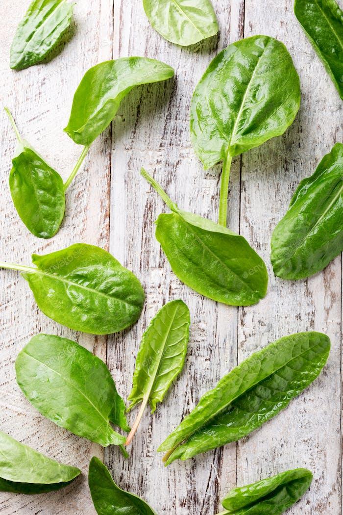 Frische Bio-Sauerampfer Blätter