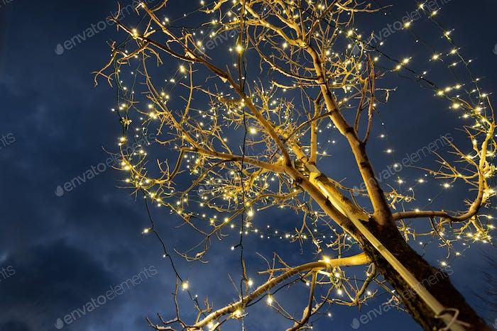 Christmas lights decorating a tree; dark sky background