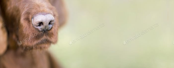 Cute dog nose close-up banner