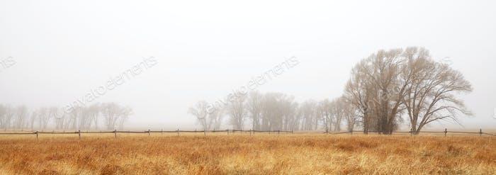 Foggy autumn rural landscape.