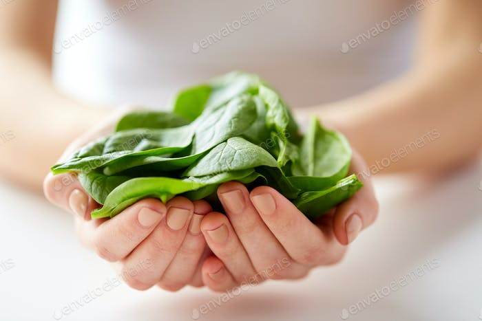 close up of woman hands holding spinach leaves