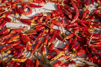 Sun drying red chili peppers in the sun, close-up of hot peppers drying