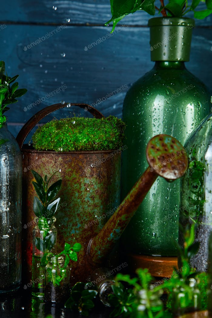 Watering can and bottle with green  leaves, plants. Gardening.