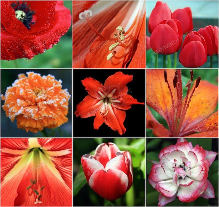 Collage aus roten Blumen
