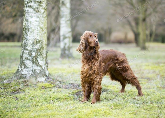 Hermoso perro de pie en el Parque