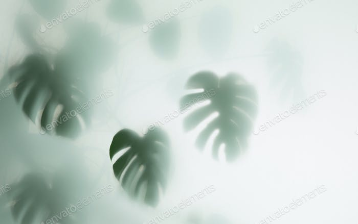 monstera palm in fog