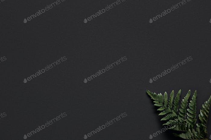 Green fern leaf on black background
