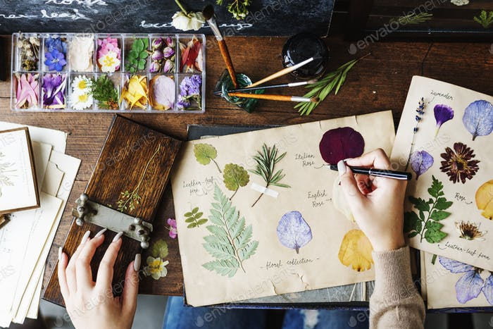 People Hand Writing Dry Flowers Plants Collection Details