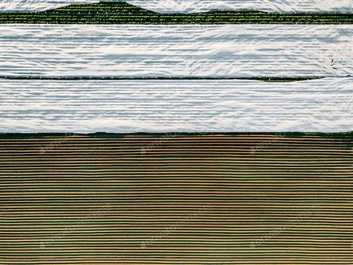 Luftaufnahme von Kartoffelreihen Feld in der landwirtschaftlichen Landschaft