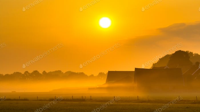 Orange farm sunrise agricutural scenery