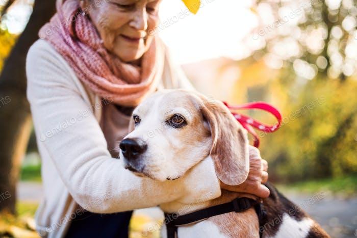 Eine ältere Frau mit Hund im Herbst Natur.
