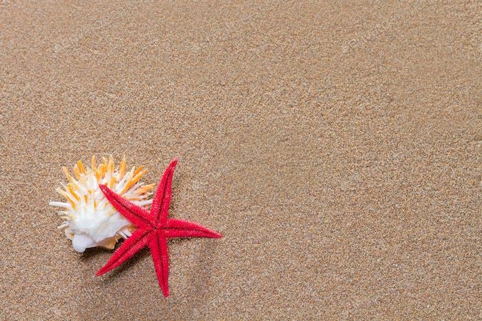 Seestern am Sandstrand