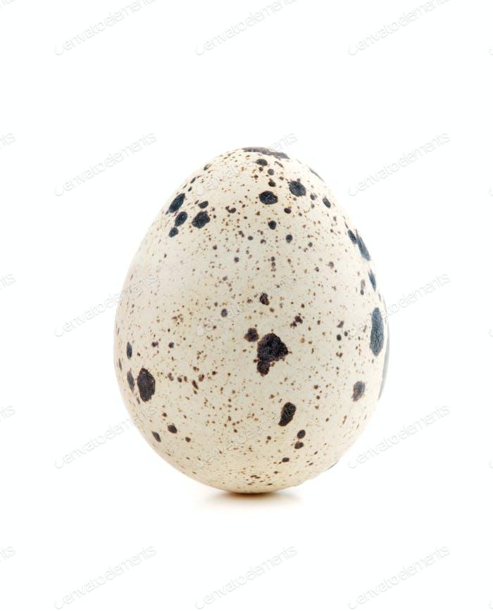 One quail egg