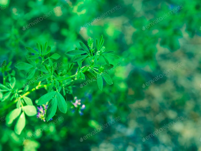 Purple and green flowers background. Soft focus