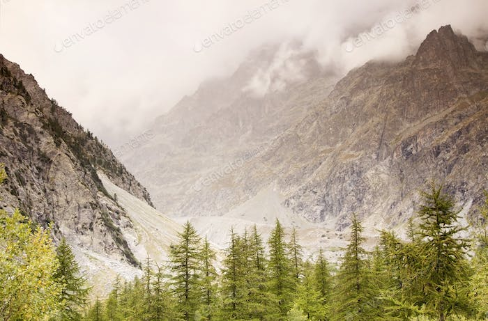 Foggy mountains with clouds and pine trees