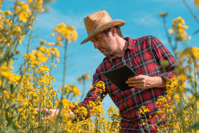 Farmer agronomist using innovative technology tablet computer in blooming rapeseed field