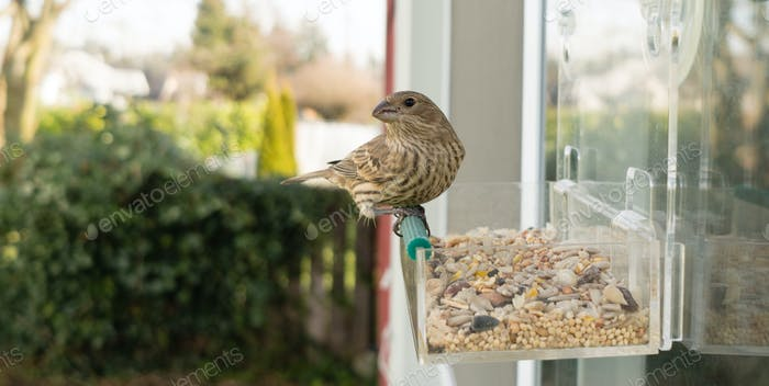 Wild Bird Lands Window Feeder Outdoor Urban Wildlife