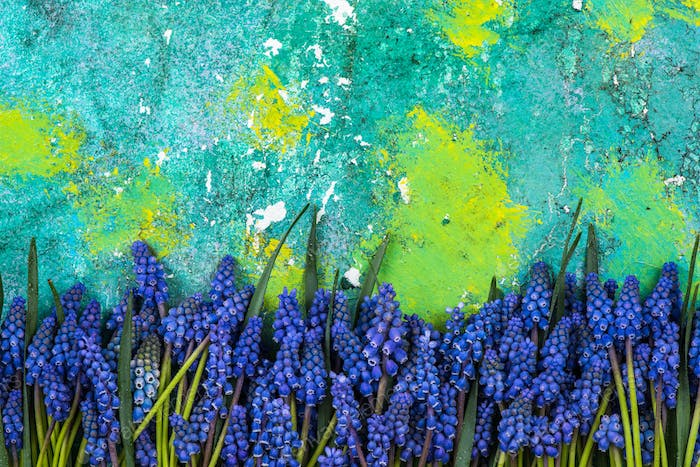 Blue spring flowers on colorful background