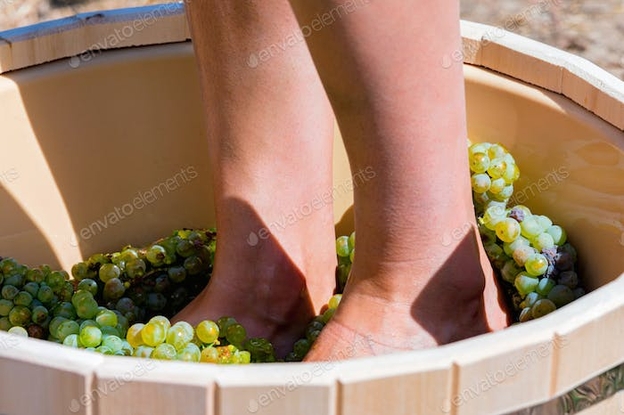 Close up of female feets crush grapes in a wooden tub