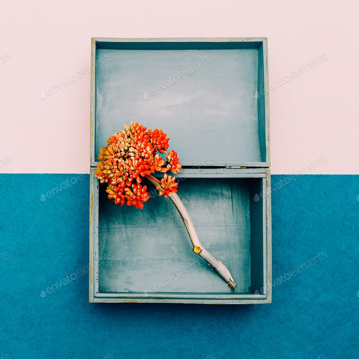 Flower in the box. Minimal design art