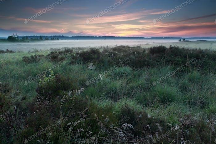 summer sunrise over marsh