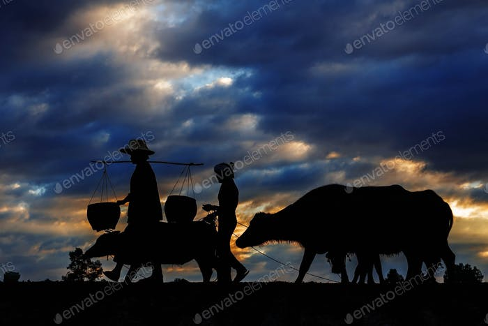 Remove Saved farmers and buffalo with of silhouette