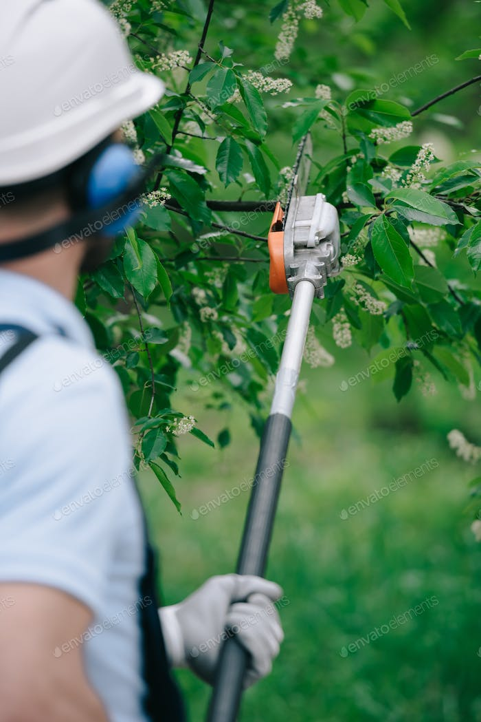 back view of gardener trimming trees with telescopic pole saw in park