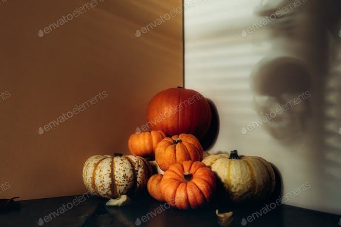 Pumpkins with strong shadows