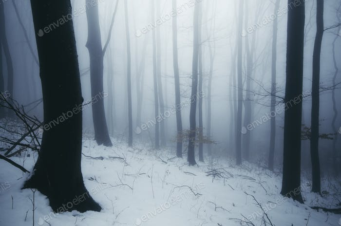 Enchanted foggy winter forest at dusk