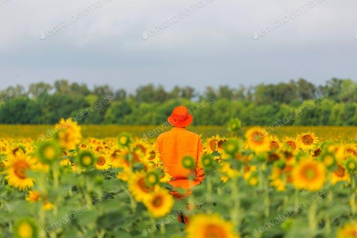 Man in sunflowers field