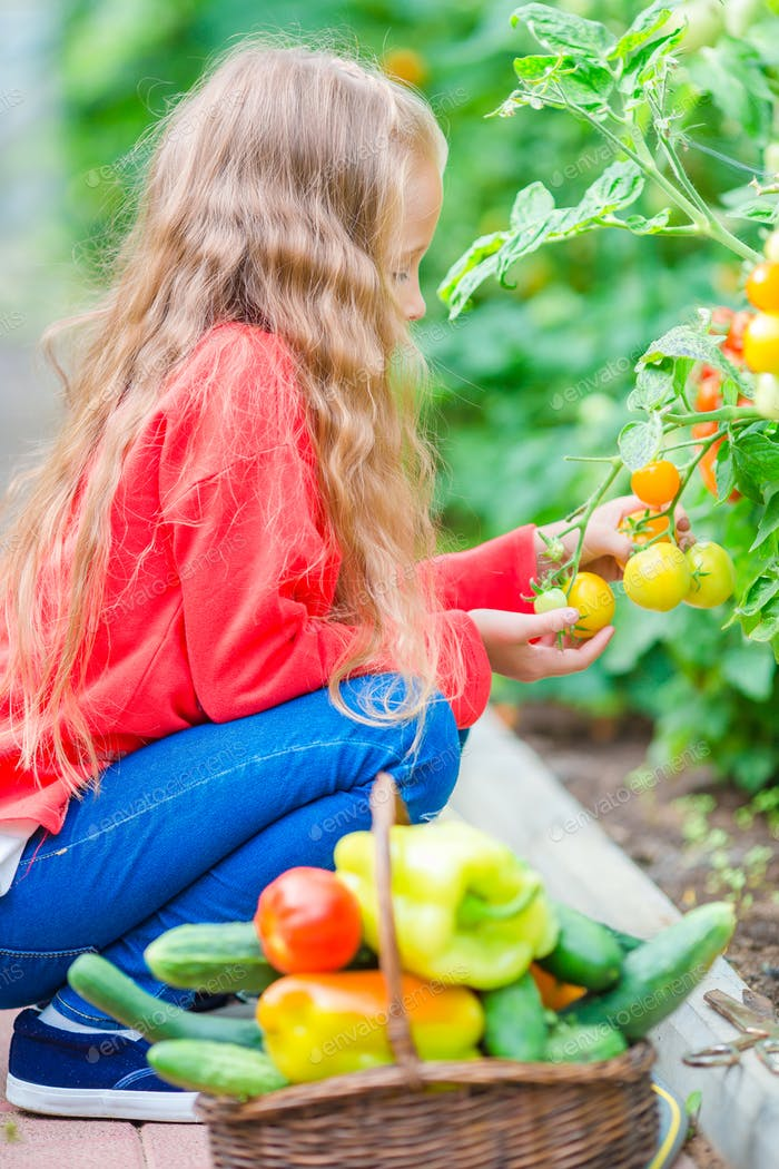 Adorable little girl harvesting cucumbers and tomatoes in greenhouse. Portrait of kid with red