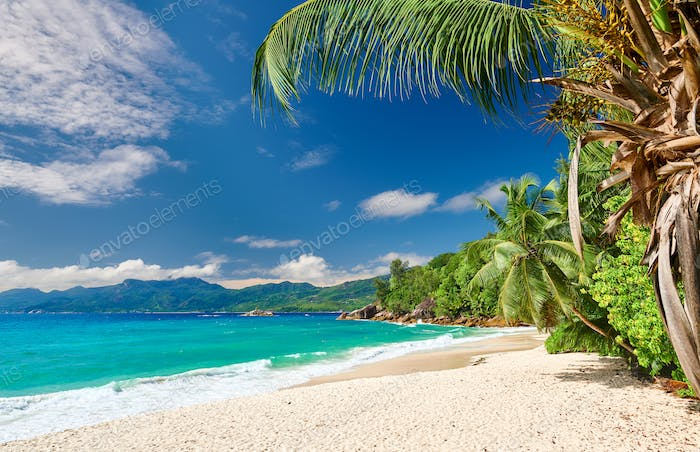 Beautiful Anse Soleil beach with palm tree at Seychelles