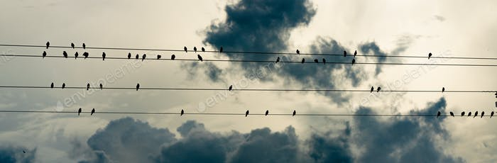 Birds Congregate Gather on Electrical Wires Storm Brewing