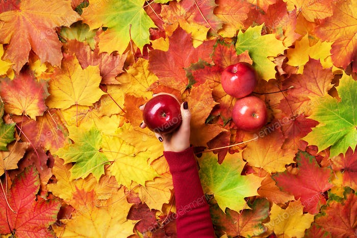 Female hand holding red apple over autumn leaves background. Vegan, vegetarian concept. Top view