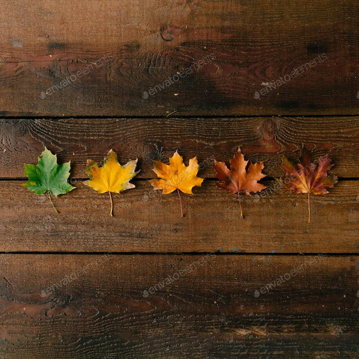 Creative layout of colorful autumn leaves.