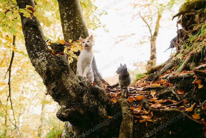 Two cute cats walk in forest