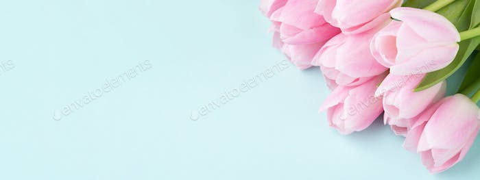Banner with Pink Tulips on Blue Backgound.