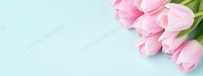 Banner mit rosa Tulpen auf blauem Backgound.