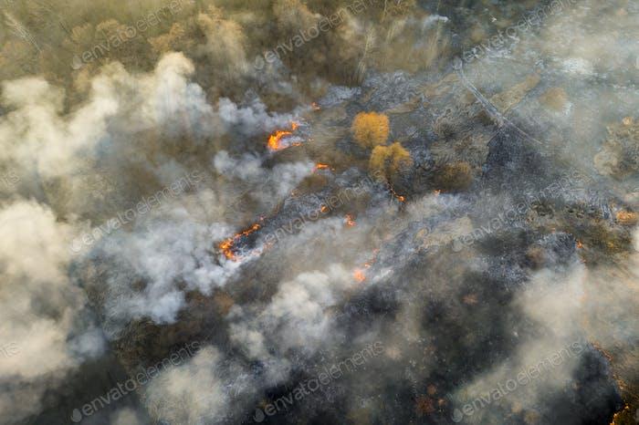 Luftaufnahme von Lauffeuer auf dem Feld. Riesige Rauchwolken