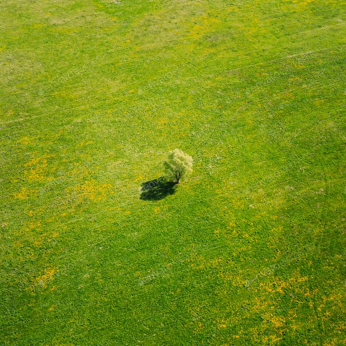 Aerial View Of Agricultural Landscape With Lonely Tree In Spring Field, Summer Meadow. Beautiful